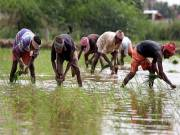 Rs 5,500cr for Telangana to procure paddy at MSP