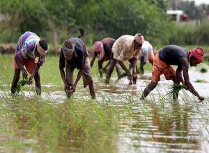 Rs 5,500 Cr for Telangana to procure paddy at MSP