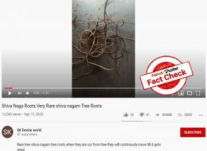 Fact Check: Horsehair worm FALSELY claimed as Shiva Naga tree roots