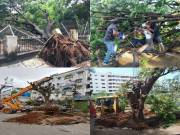 Hyderabad NGO Vata foundation offers solution to revive fallen trees post flood